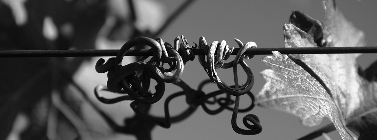 about_tendrils@2x